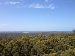 View from the top of the Gloucester Tree