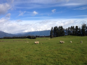 View from our B&B in Te Anau.  Like winter!