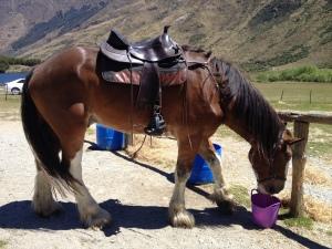 My Horse - Ben