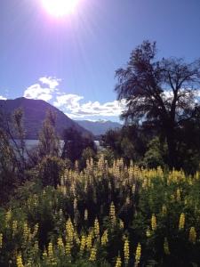 Early summer in Wanaka